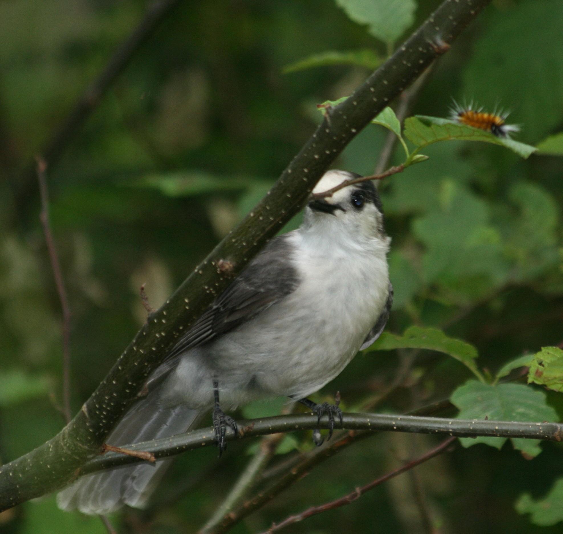 Birding Big Year In Washington State