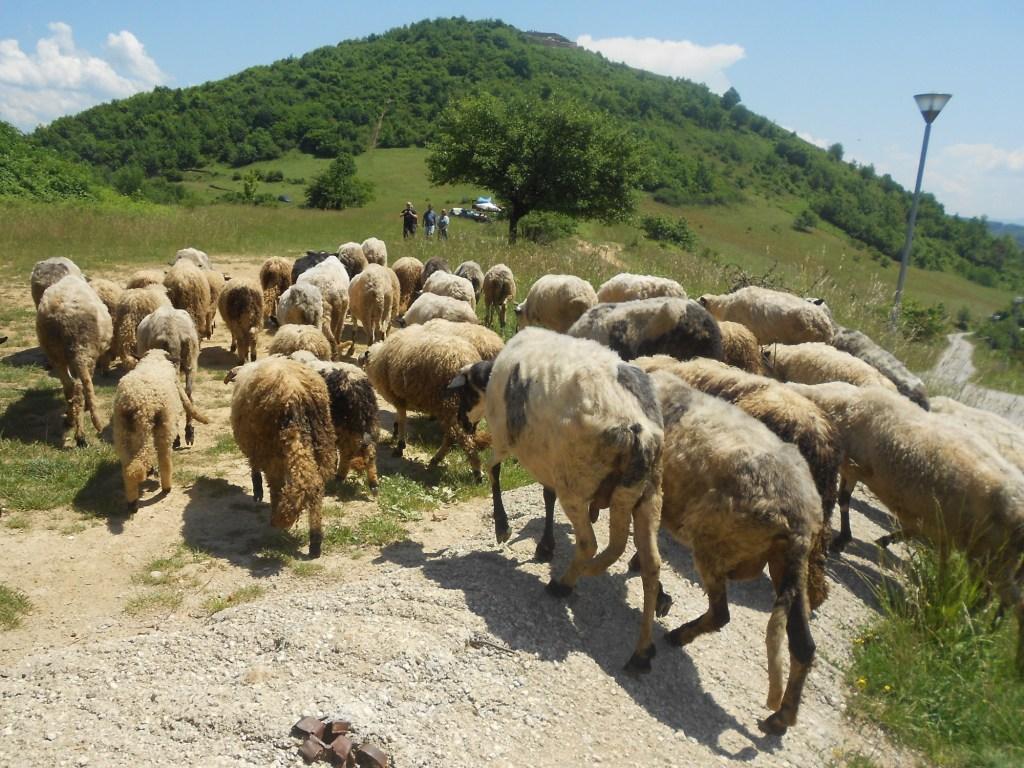 Путь к крепости. Нет, овечки со мной на крепость не полезли, остались внизу щипать травку. Фото: Елена Арсениевич, CC BY-SA 3.0