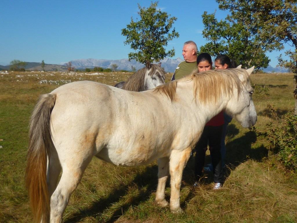 Мы и лошади. Фото: Елена Арсениевич, CC BY-SA 3.0