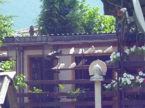 Голубятня в Травнике. Фото: Елена Арсениевич, CC BY-SA 3.0