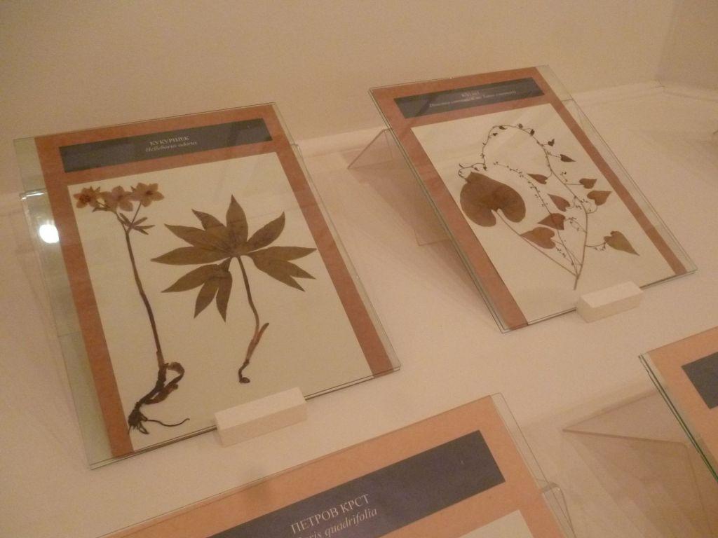 Экспонаты из коллекции лекарственных растений. Фото: Елена Арсениевич, CC BY-SA 3.0