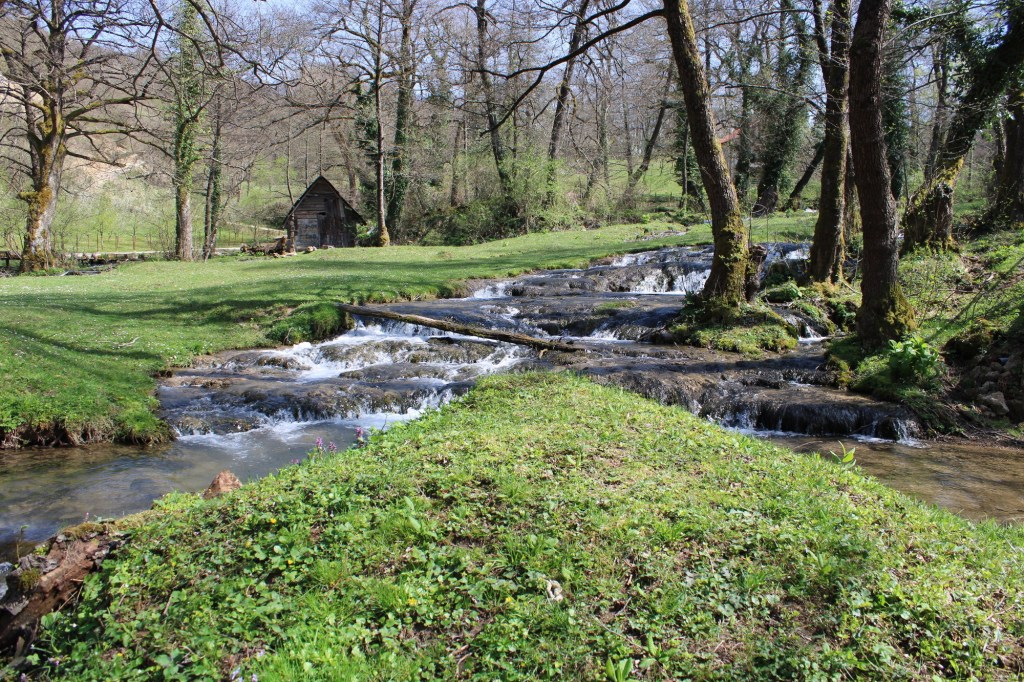 Вода и зелень. Фото: Елена Арсениевич, CC BY-SA 3.0