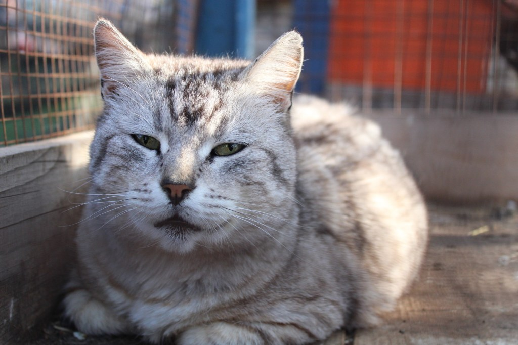 И котики. Фото: Елена Арсениевич, CC BY-SA 3.0