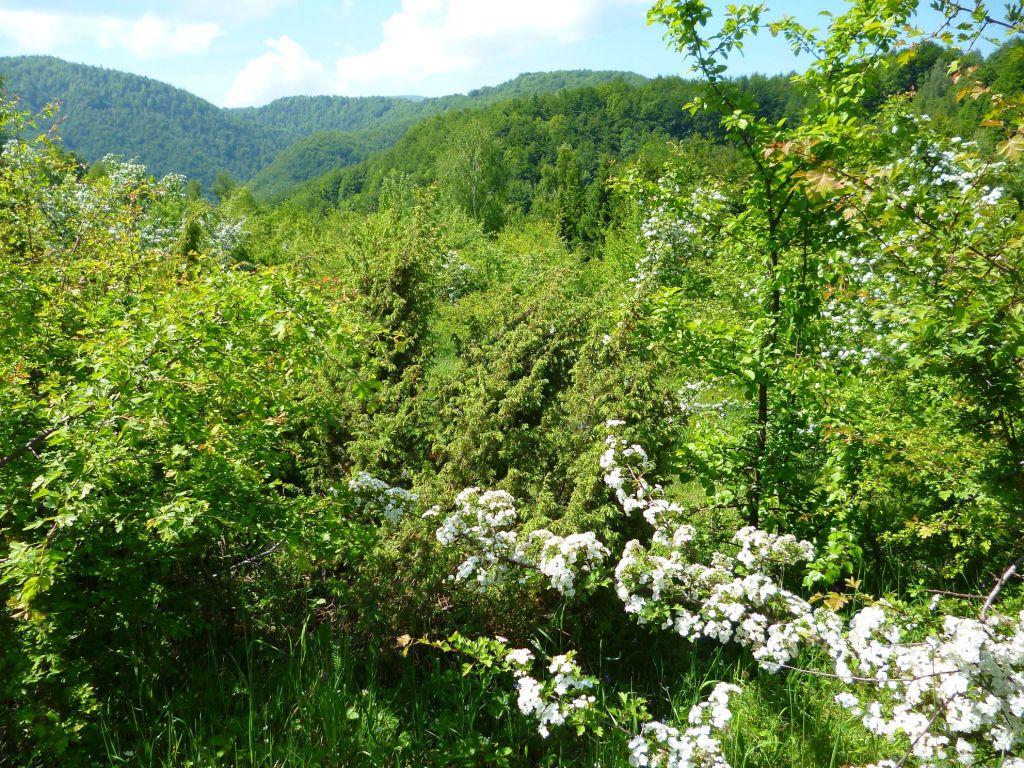 Горы, леса, цветы. Фото: Елена Арсениевич, CC BY-SA 3.0