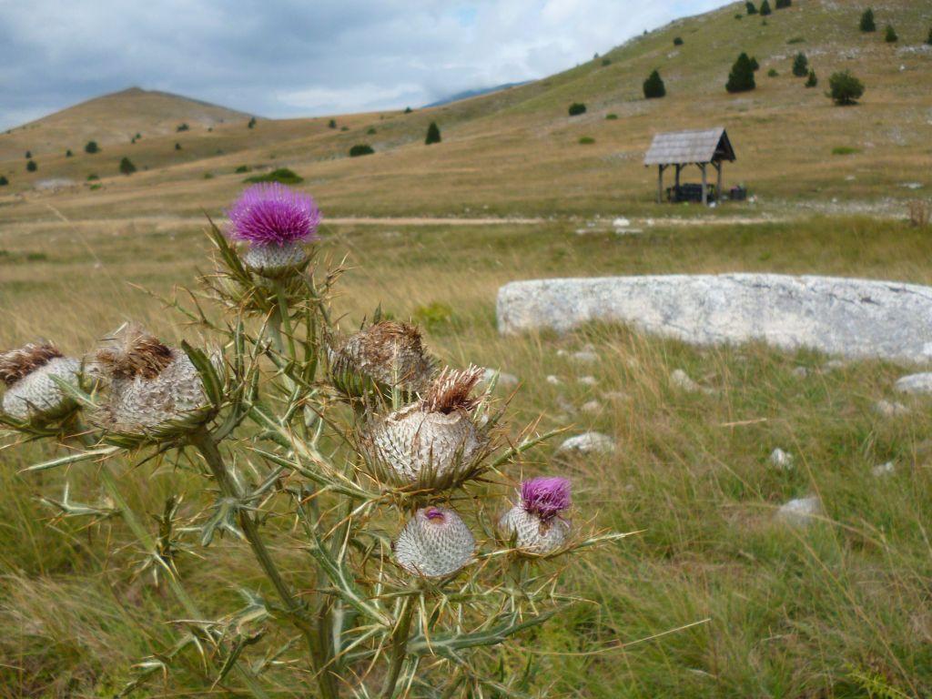 Флора. Фото: Елена Арсениевич, CC BY-SA 3.0