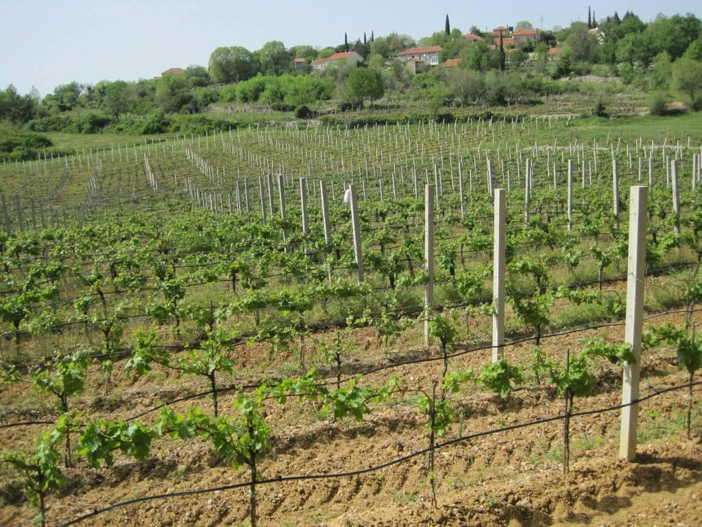 Пасторальные пейзажи вокруг винодельни Marijanović. Vinarija Marijanović, Copyright