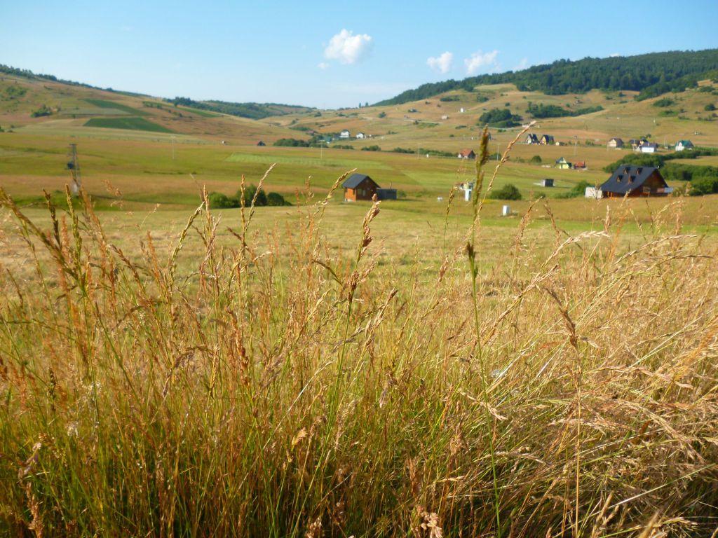 Плоскогорье Ростово в июле. Фото: Елена Арсениевич, CC BY-SA 3.0