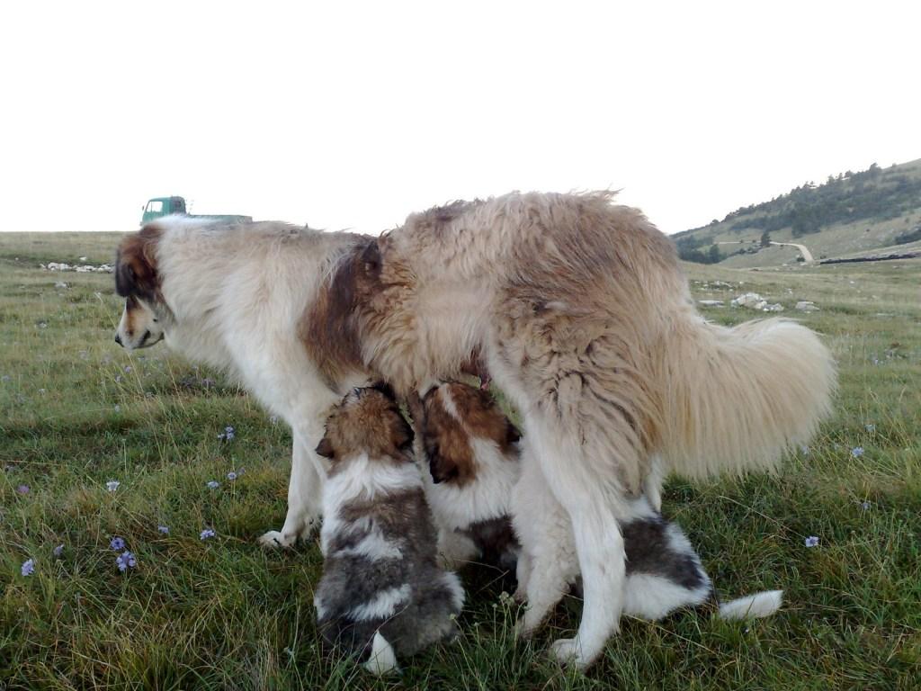 Торняки-малыши и их мама. Brian Eager, CC BY 2.0