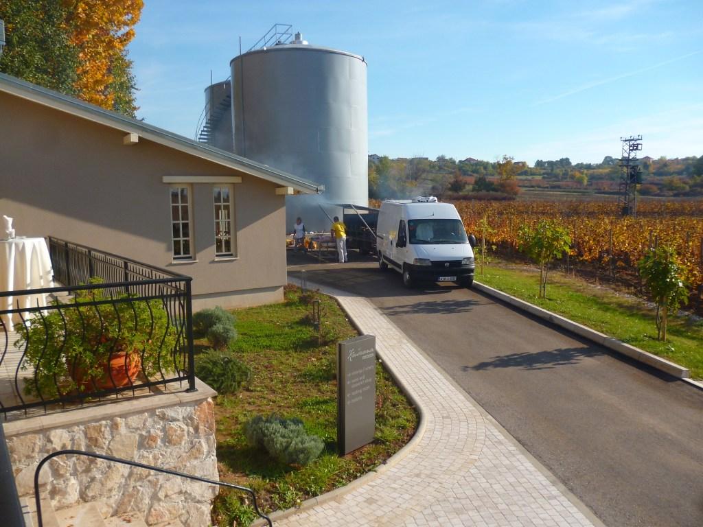 Бетонные бочки и виноградник. Фото: Елена Арсениевич, CC BY-SA 3.0