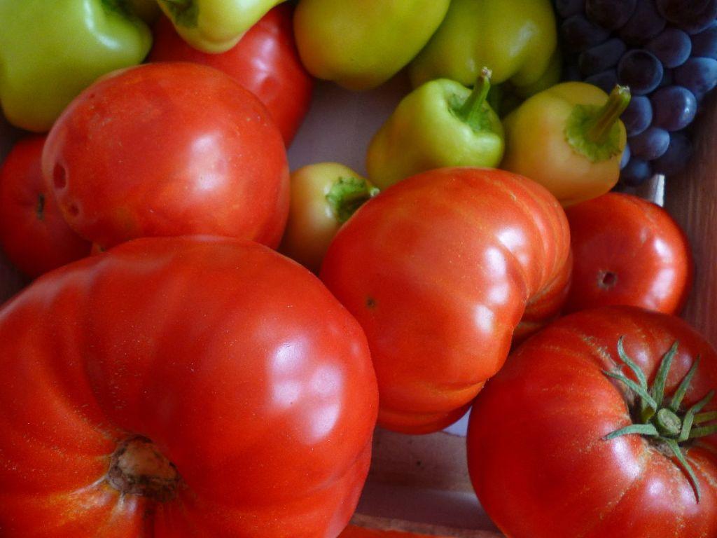 Paradajz, rajčica, помидор. Фото: Елена Арсениевич, CC BY-SA 3.0
