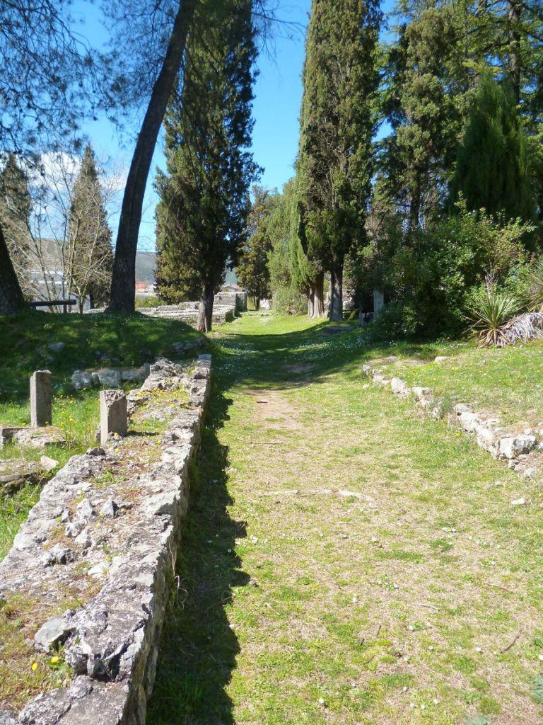 Кипарисы посадили в начале 20-го века. Фото: Елена Арсениевич, CC BY-SA 3.0