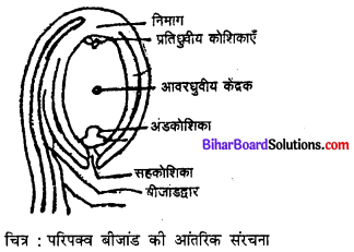 Bihar Board 12th Biology Model Question Paper 2 in Hindi 1
