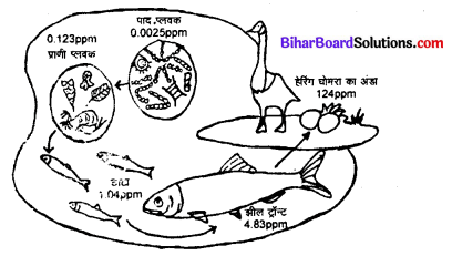 Bihar Board 12th Biology Model Question Paper 5 in Hindi 4