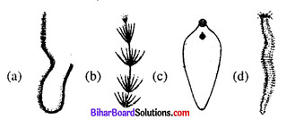 Bihar Board 12th Biology Objective Answers Chapter 1 जीवों में जनन 1
