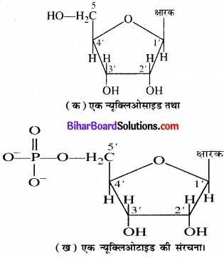 BIhar Board Class 12 Chemistry Chapter 14 जैव-अणु  img-14