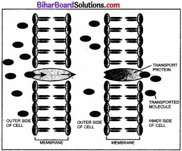 Bihar Board Class 11 Biology Chapter 11 पौधों में परिवहन
