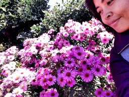 the Purple Flowers and Me