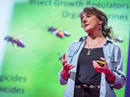 TED Talk – why bees are disappearing