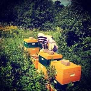 Queen B - bijenbaas imkers stellen zich voor - Bijenbaas Queen B
