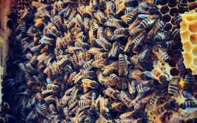 Het is voorjaar en de bijen gaan los