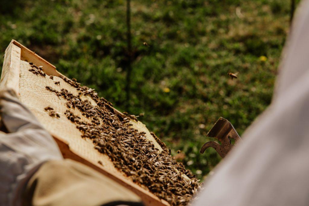 Bijentherapie: Hoe Slovenen met bijen onstpannen