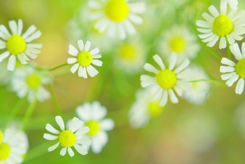 季節の変わり目は乾燥に注意、ゆらぎ肌とその対策