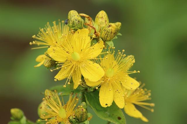 Allergie Planten Huid : Plantensap met zon slecht voor de huid bijwerkingen van werk