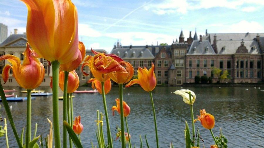 Nederlandse politici werken onder meer op het binnenhof