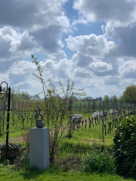 High Wine Bij Wijngaard Amsteltuin Amstelveen