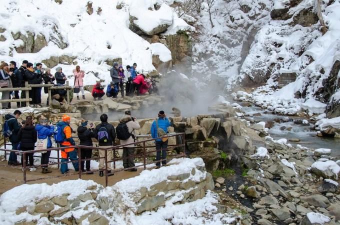 スノーモンキー ニホンザル 日本 冬 入浴 野生動物 霊長類 スパ 雪 魅力 温泉
