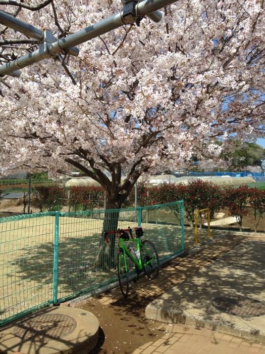 富士川親水広場