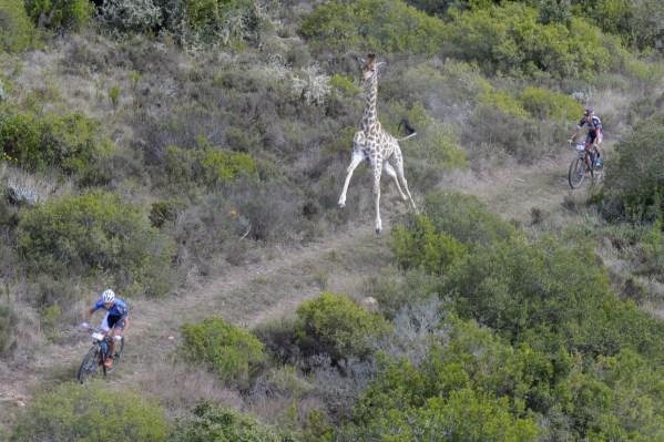 girafa-no-mtb