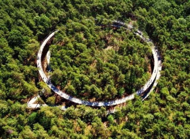 em-limburgo-e-possível-atravessar-um-lago-de-bicicleta-e-pedalar-sobre-as-arvores-2.jpg