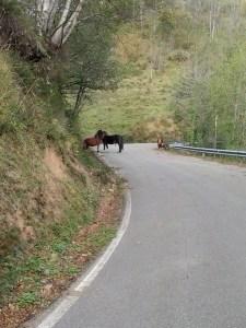 Horse Jam