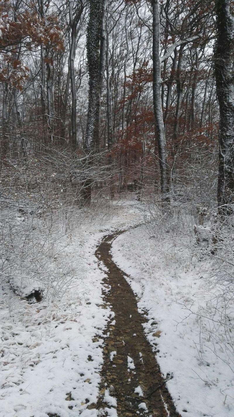 Singletrail Winter
