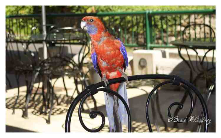Rosella at Caves House