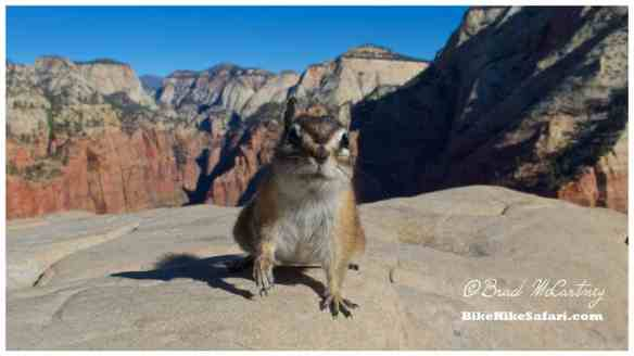 Cheeky Chipmunks at the summit