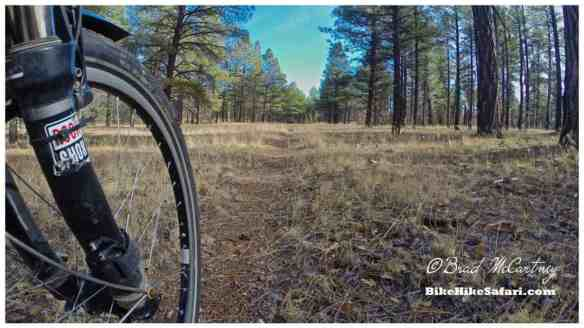 Single Trail on the Arizona trail