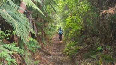 Mangapurua Track