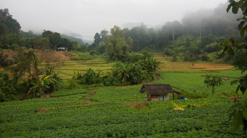 Thai Farm