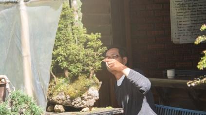 Bonsaj v Královském zahradním projektu