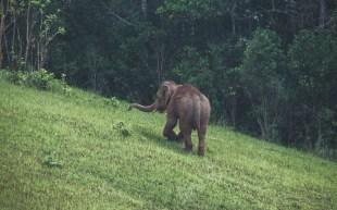 Náš první divoký slon, Khao Yai NP