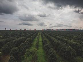 Kávové plantáže Paksong Highlands
