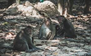 Monkeys near Angkor Wat
