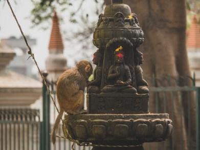 Monkey at Monkey Temple, Kathmandu