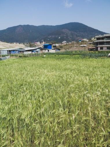 Pole, Kathmandu Valley