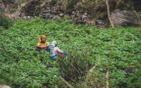Ženy v poli. Ghasa, Nepál