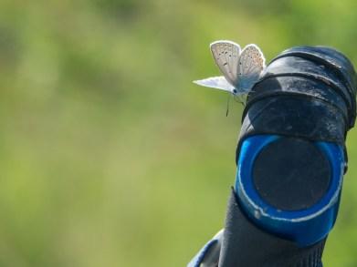 Motýlek. Oblast Kazarmanu, Kyrgyzstán