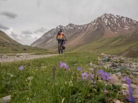 Matching? Tosor Pass Area, Kyrgyzstan
