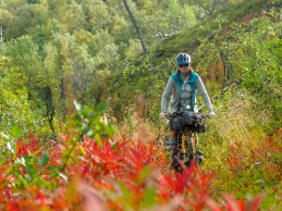 Barvy švédského podzimu. Národní park Abisko, Švédsko